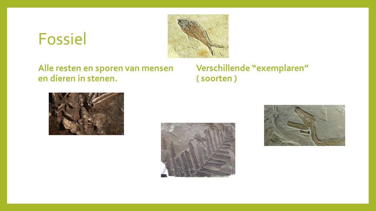 Fossiel Alle resten en sporen van mensen en dieren in stenen.
