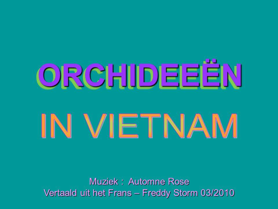 Vertaald uit het Frans – Freddy Storm 03/2010