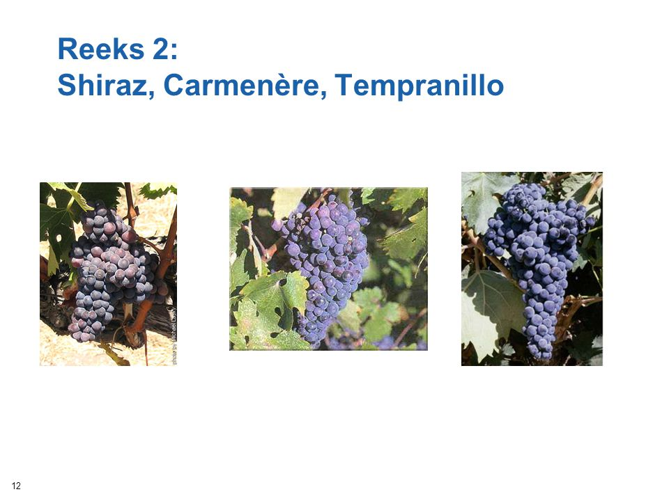 Reeks 2: Shiraz, Carmenère, Tempranillo