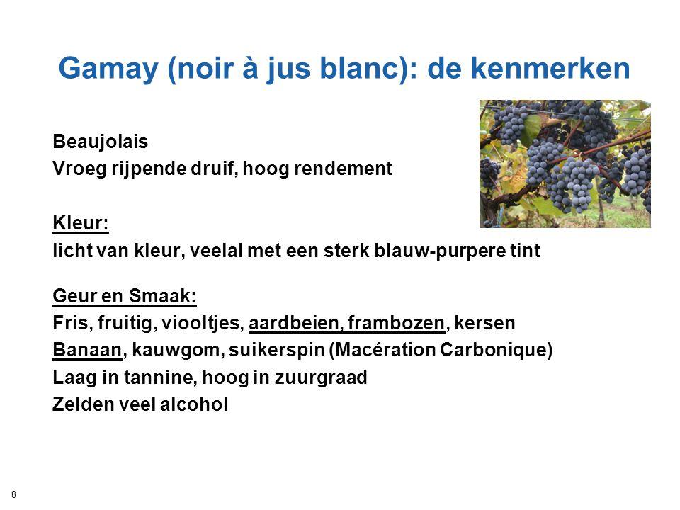 Gamay (noir à jus blanc): de kenmerken