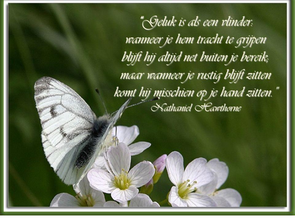Geluk is als een vlinder: wanneer je hem tracht te grijpen