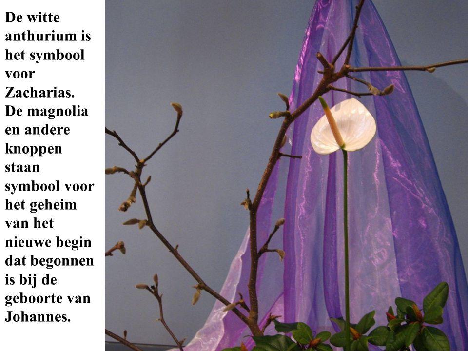De witte anthurium is het symbool voor Zacharias