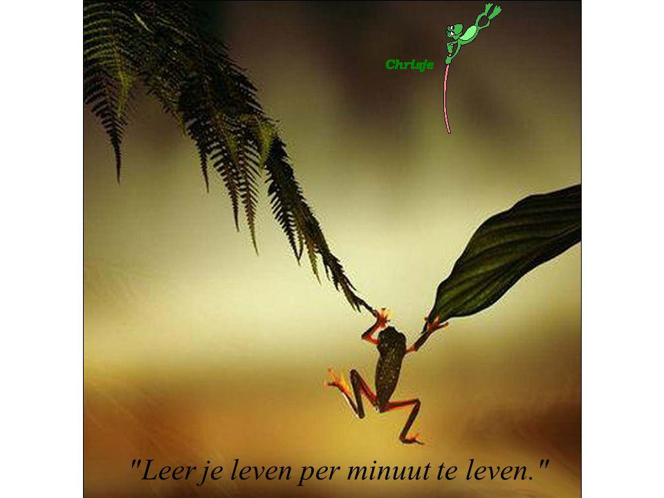 Leer je leven per minuut te leven.