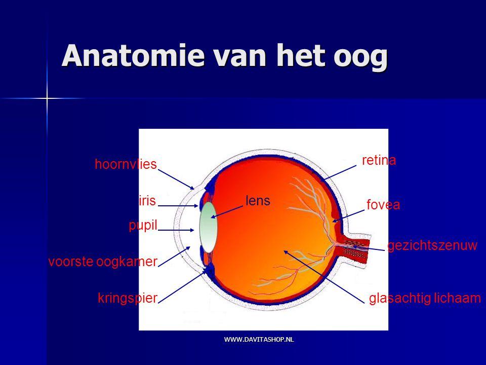 Anatomie van het oog kringspier hoornvlies iris pupil voorste oogkamer