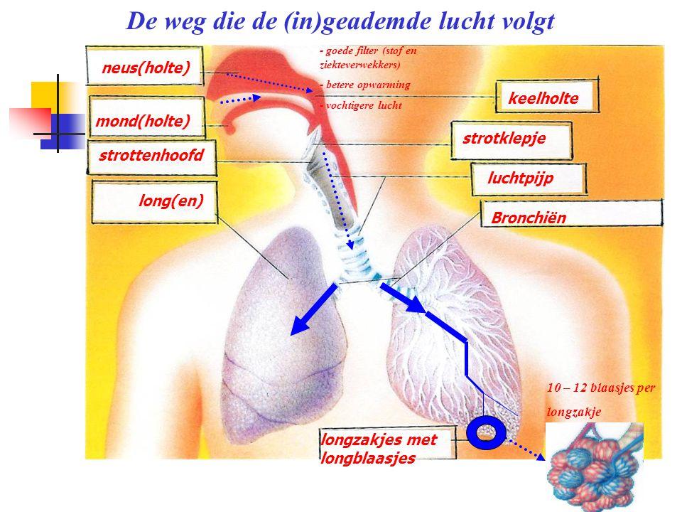 neus(holte) De weg die de (in)geademde lucht volgt mond(holte)