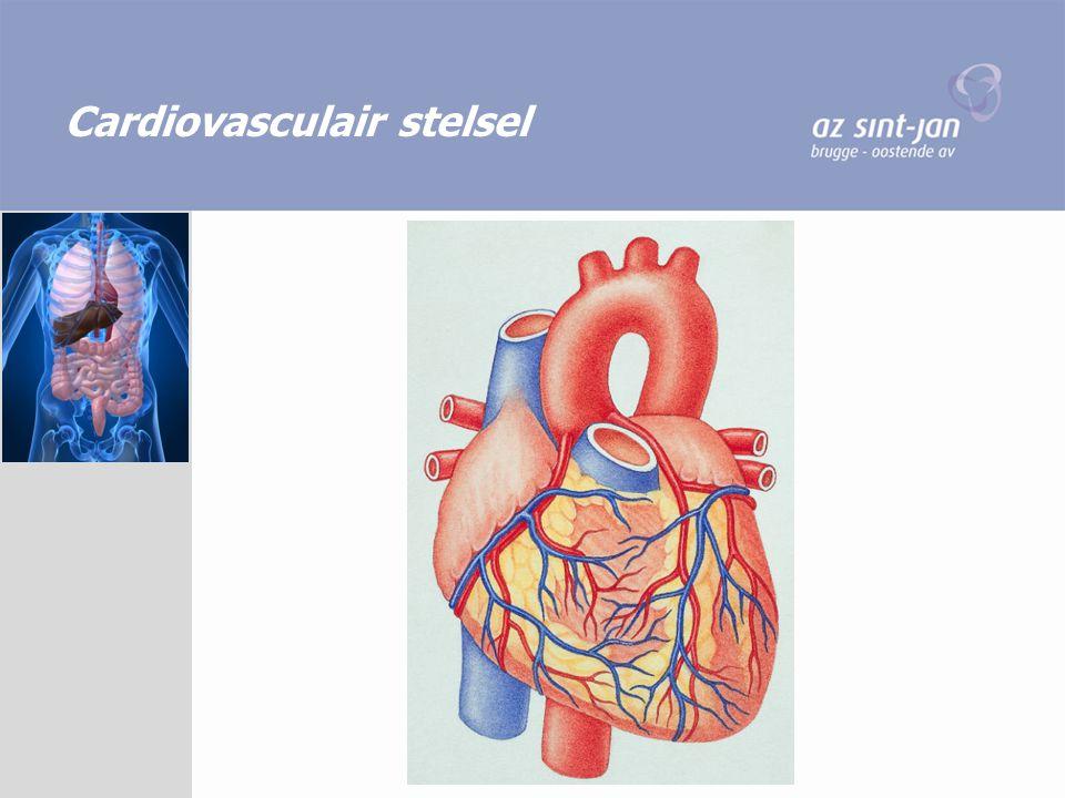 Cardiovasculair stelsel