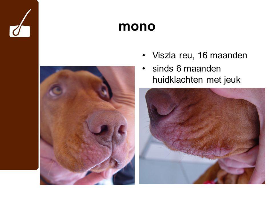 mono Viszla reu, 16 maanden sinds 6 maanden huidklachten met jeuk 2