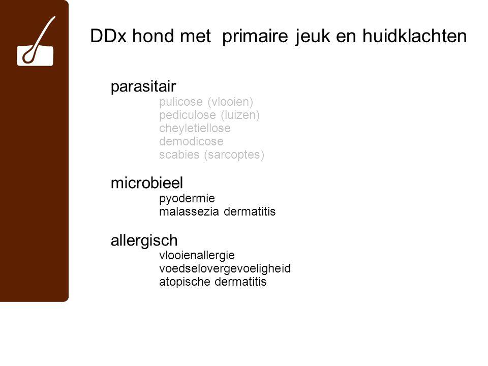 DDx hond met primaire jeuk en huidklachten