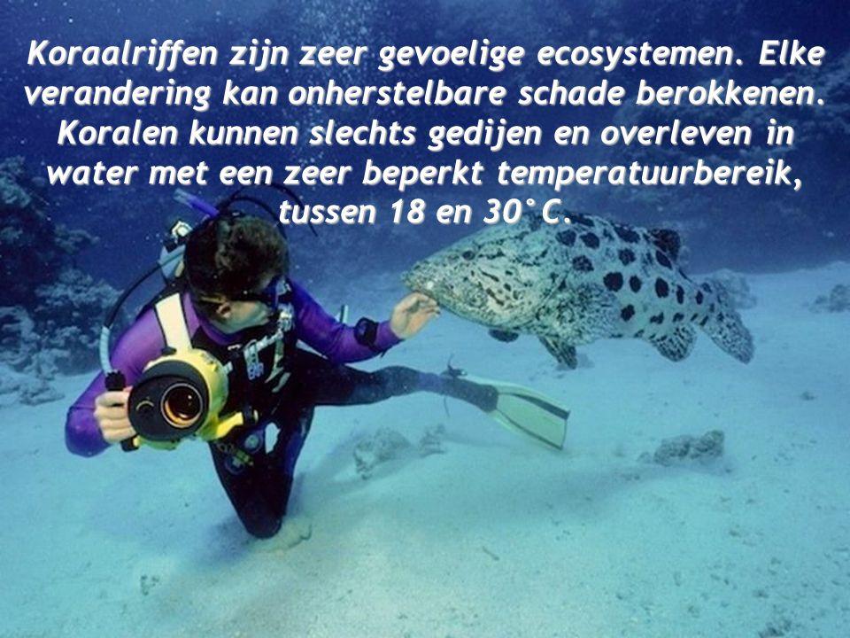 Koraalriffen zijn zeer gevoelige ecosystemen