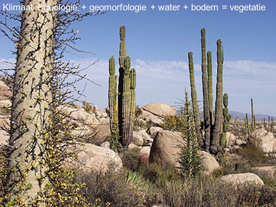 Klimaat + geologie + geomorfologie + water + bodem = vegetatie