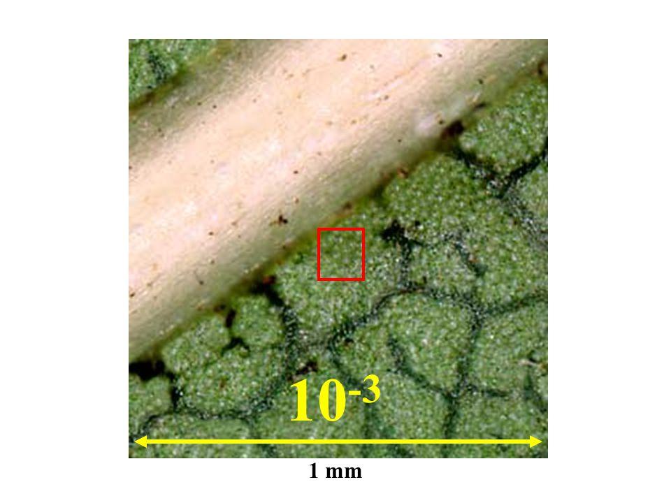 10-3 1 mm