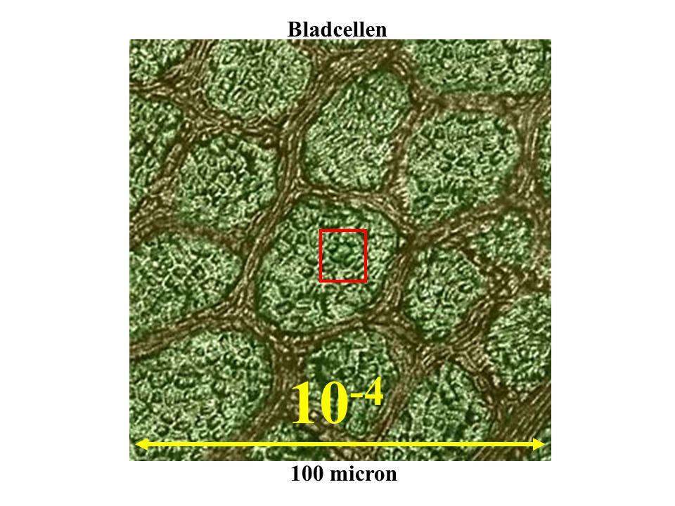 Bladcellen 10-4 100 micron