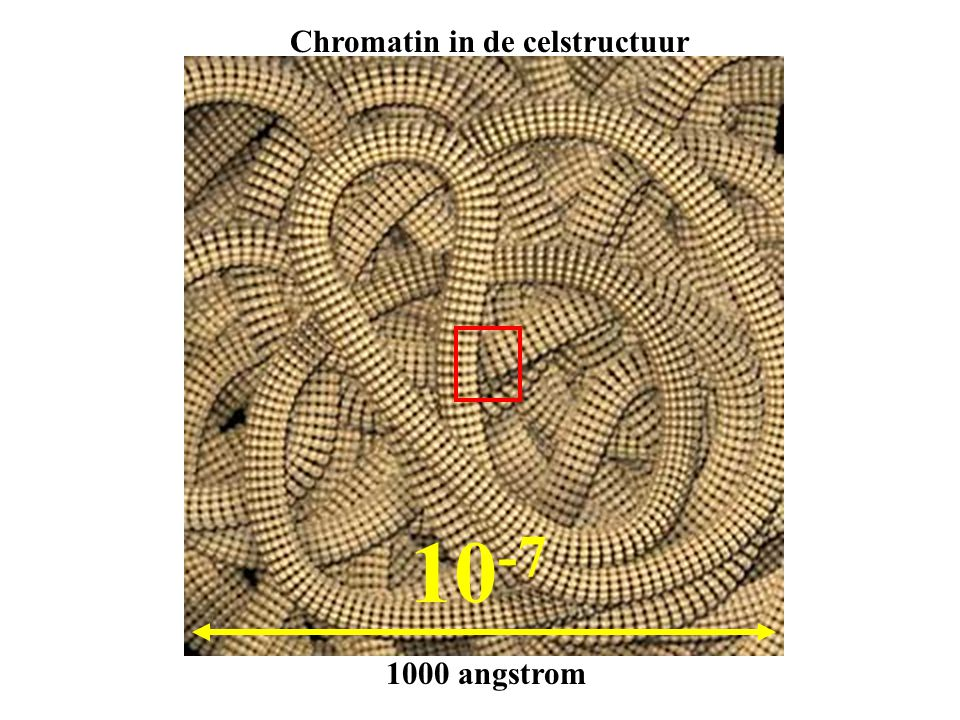 Chromatin in de celstructuur
