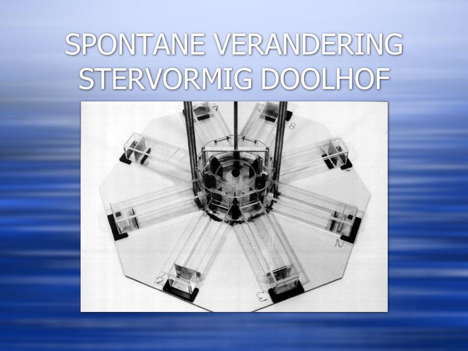 SPONTANE VERANDERING STERVORMIG DOOLHOF