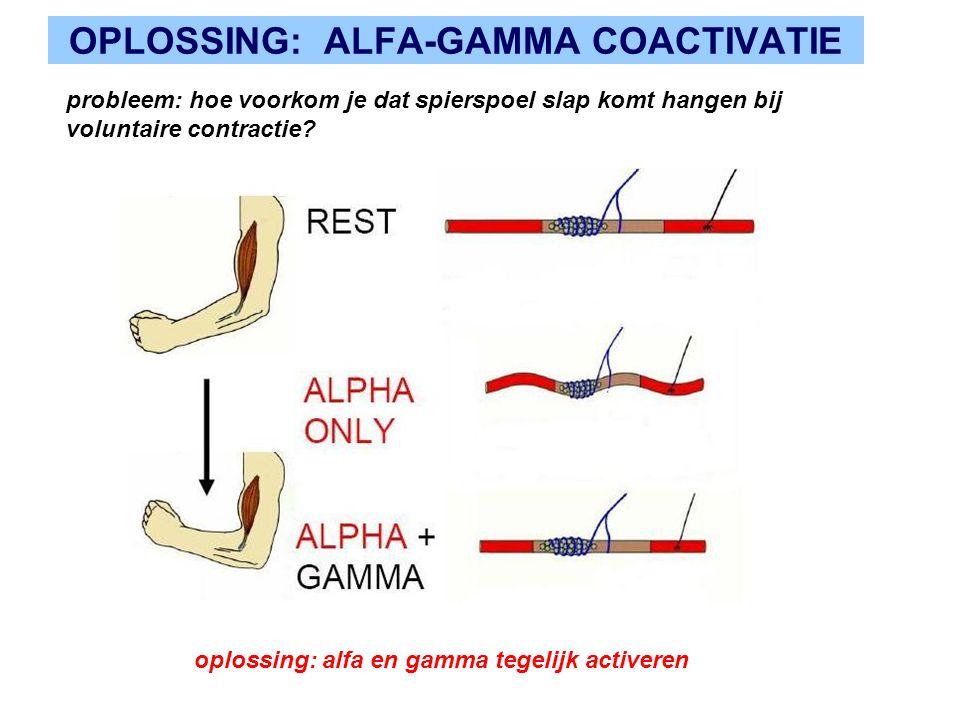 OPLOSSING: ALFA-GAMMA COACTIVATIE