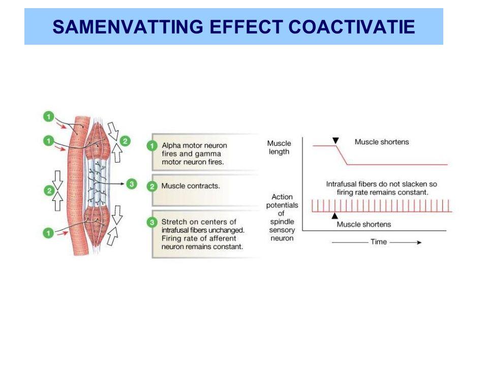 SAMENVATTING EFFECT COACTIVATIE