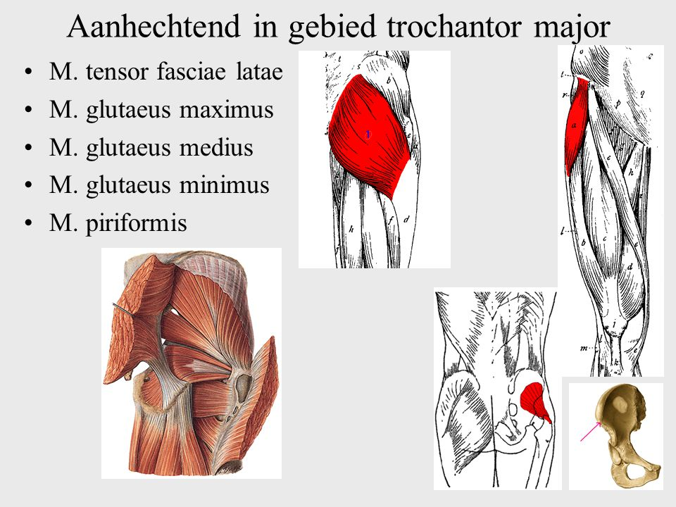 Aanhechtend in gebied trochantor major
