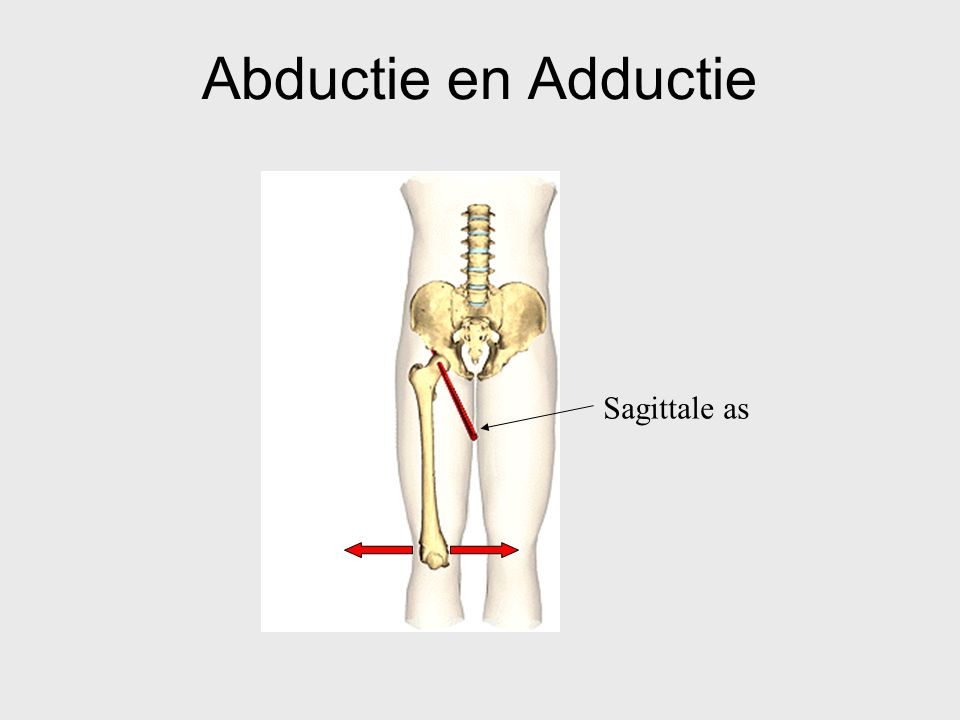 Abductie en Adductie Sagittale as