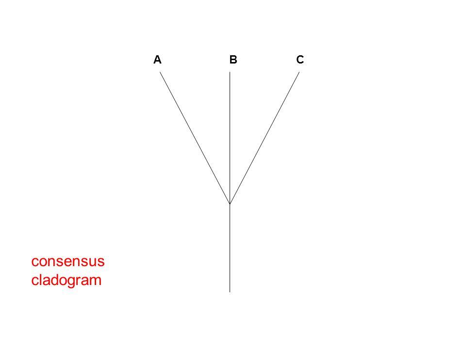 A B C consensus cladogram