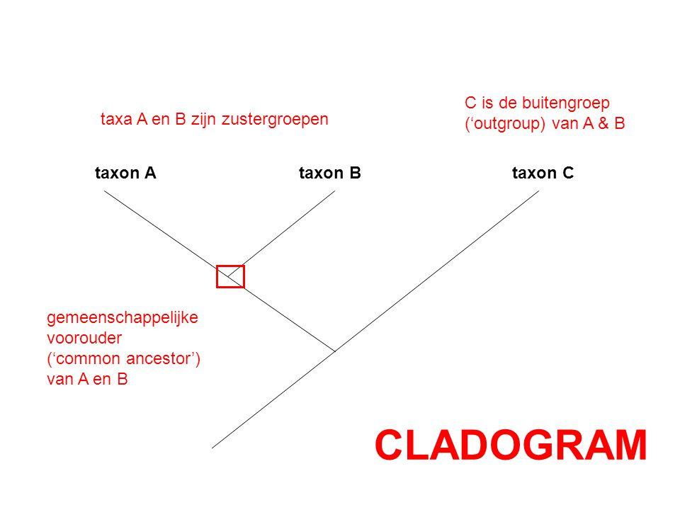 CLADOGRAM C is de buitengroep ('outgroup) van A & B