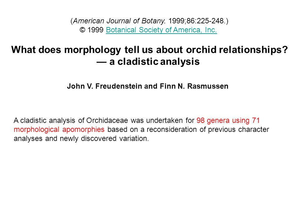 What does morphology tell us about orchid relationships