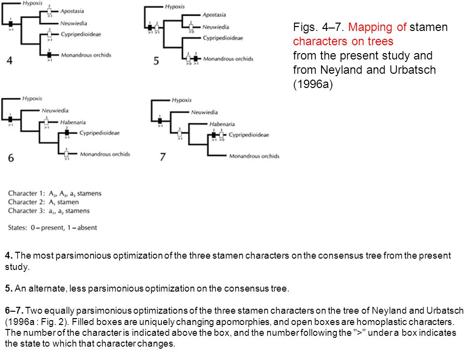 Figs. 4–7. Mapping of stamen characters on trees