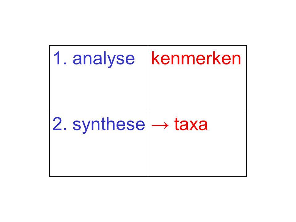 1. analyse kenmerken 2. synthese → taxa