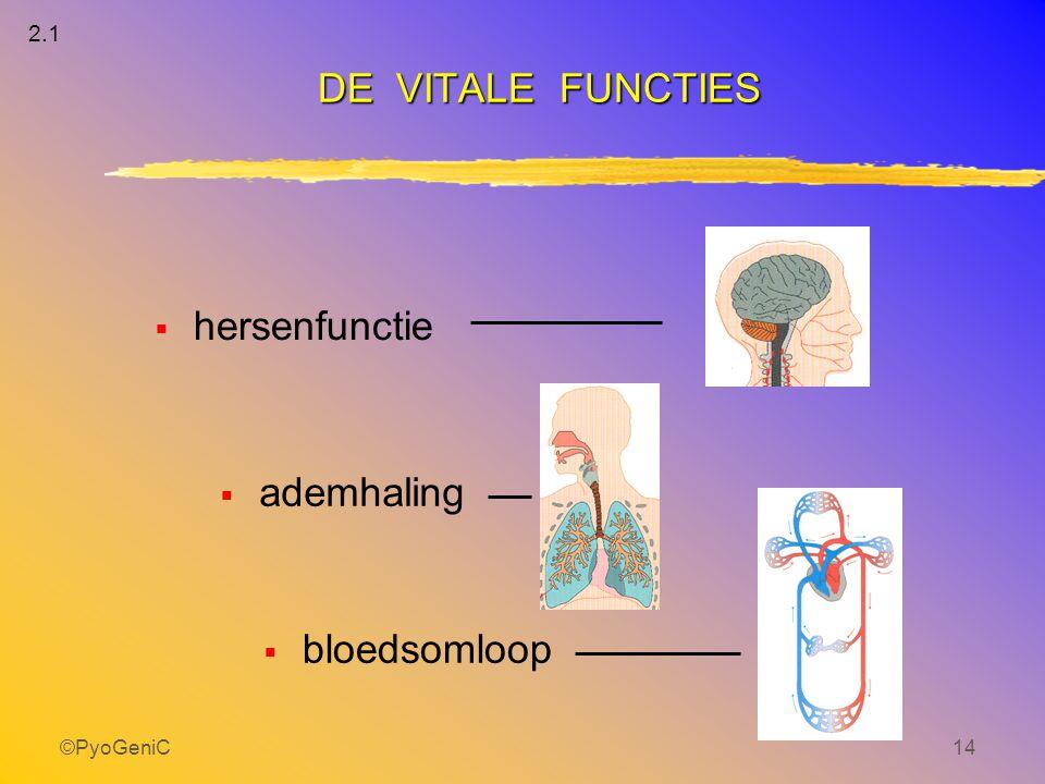 2.1 DE VITALE FUNCTIES hersenfunctie ademhaling bloedsomloop ©PyoGeniC