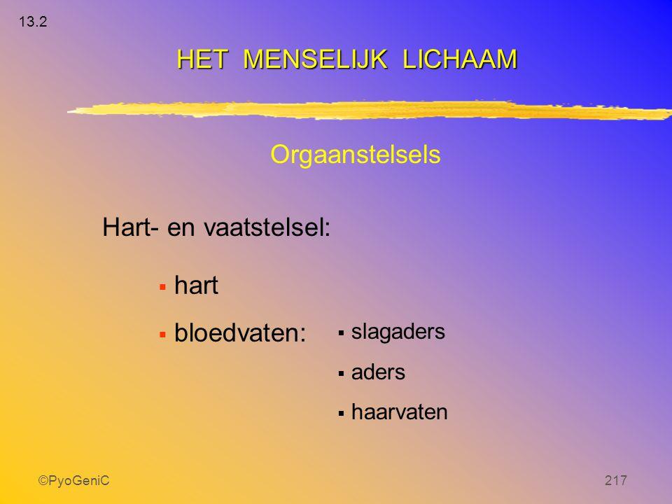 HET MENSELIJK LICHAAM Orgaanstelsels Hart- en vaatstelsel: hart