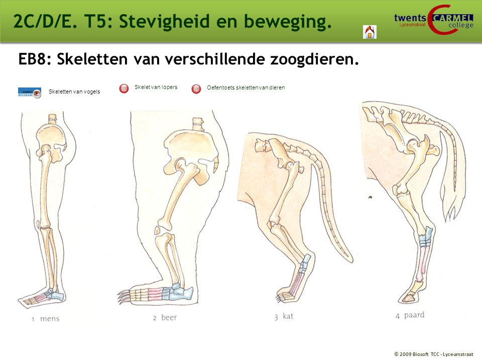 2C/D/E. T5: Stevigheid en beweging.