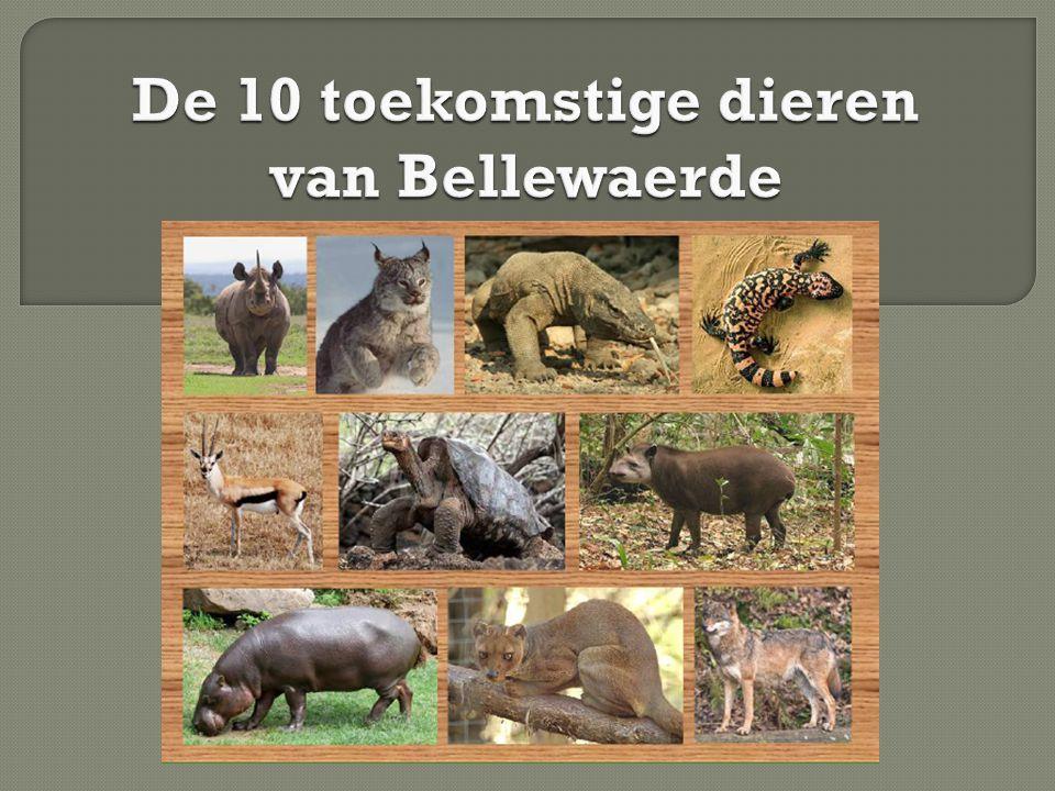De 10 toekomstige dieren van Bellewaerde