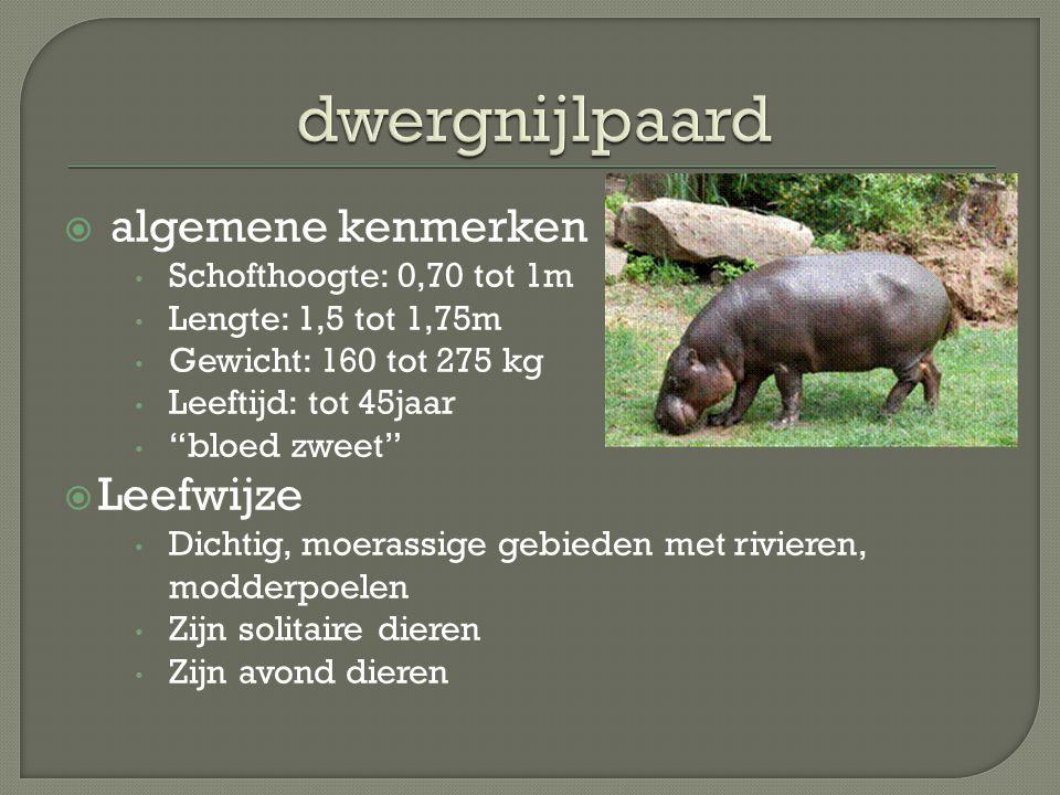 dwergnijlpaard algemene kenmerken Leefwijze Schofthoogte: 0,70 tot 1m