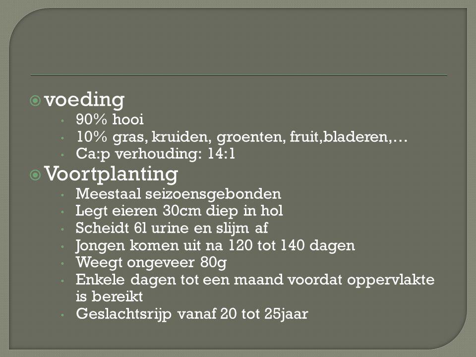 voeding Voortplanting 90% hooi
