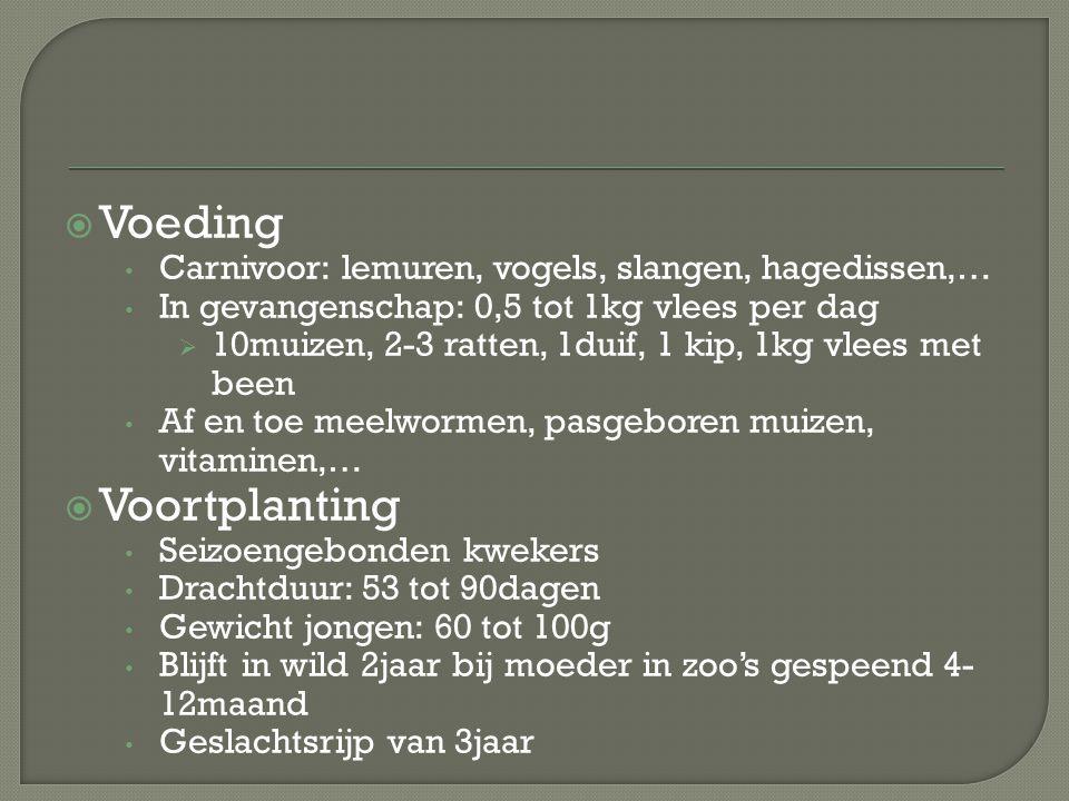 Voeding Voortplanting