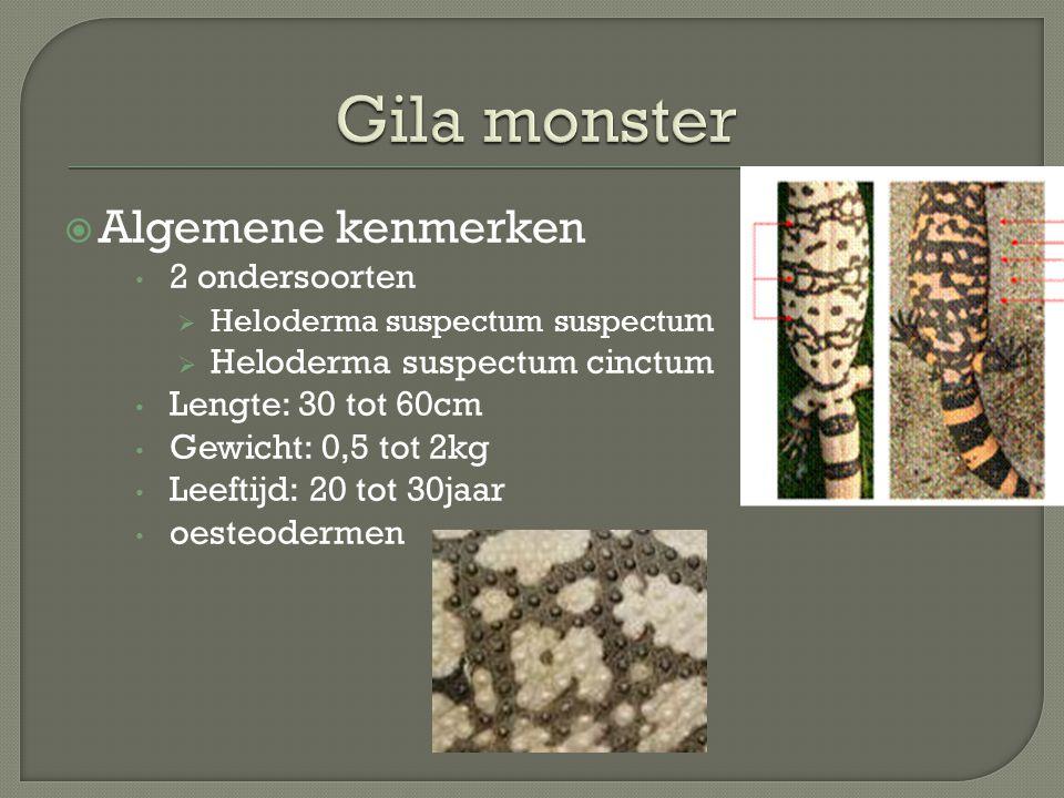 Gila monster Algemene kenmerken 2 ondersoorten