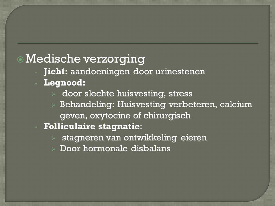 Medische verzorging Jicht: aandoeningen door urinestenen Legnood: