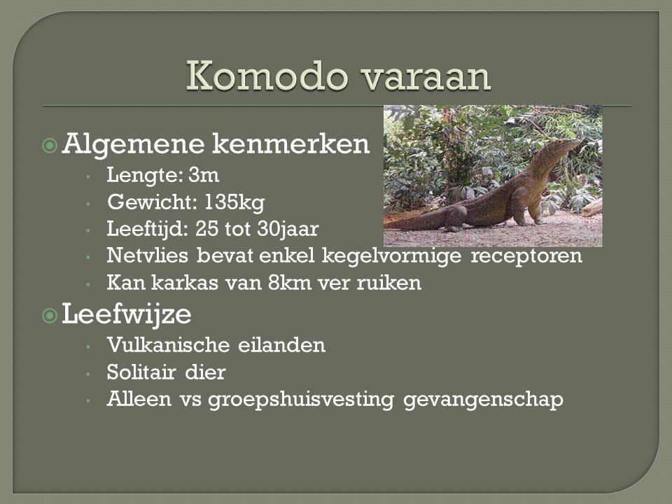 Komodo varaan Algemene kenmerken Leefwijze Lengte: 3m Gewicht: 135kg