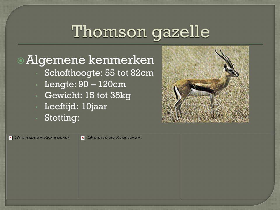 Thomson gazelle Algemene kenmerken Schofthoogte: 55 tot 82cm