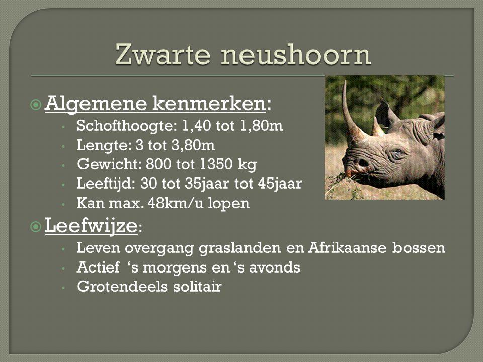 Zwarte neushoorn Algemene kenmerken: Leefwijze:
