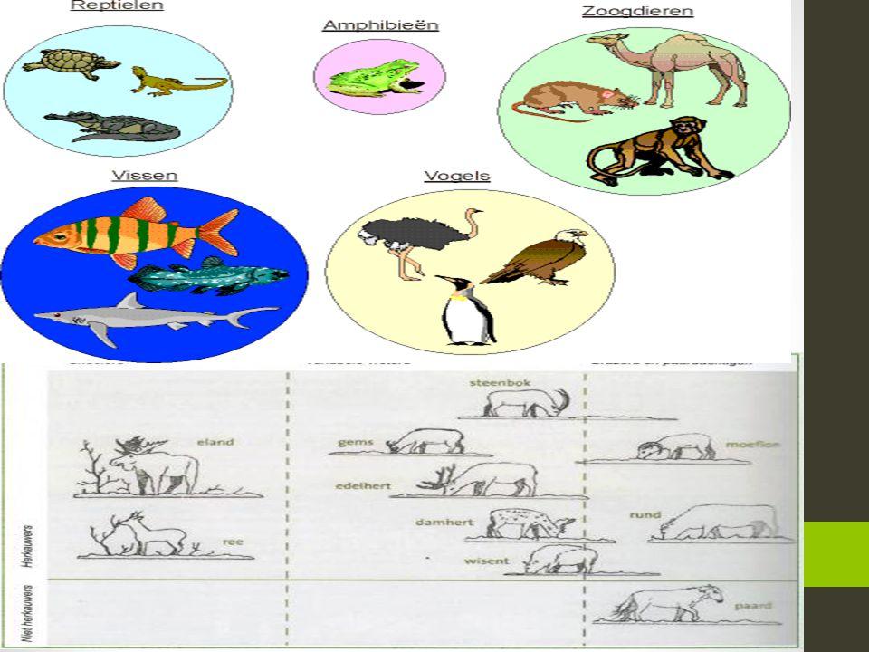 Allemaal beestjes… ABC over dieren