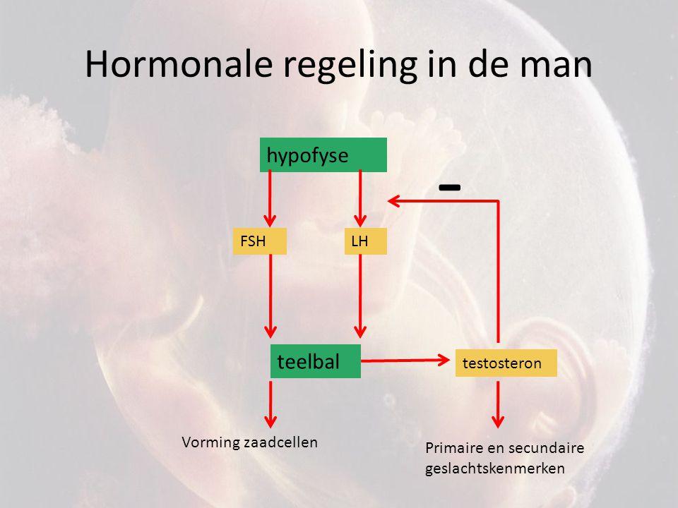 Hormonale regeling in de man