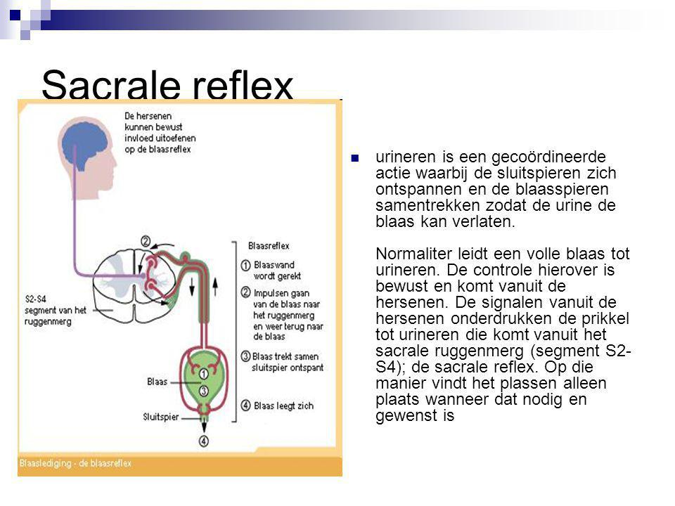 Sacrale reflex