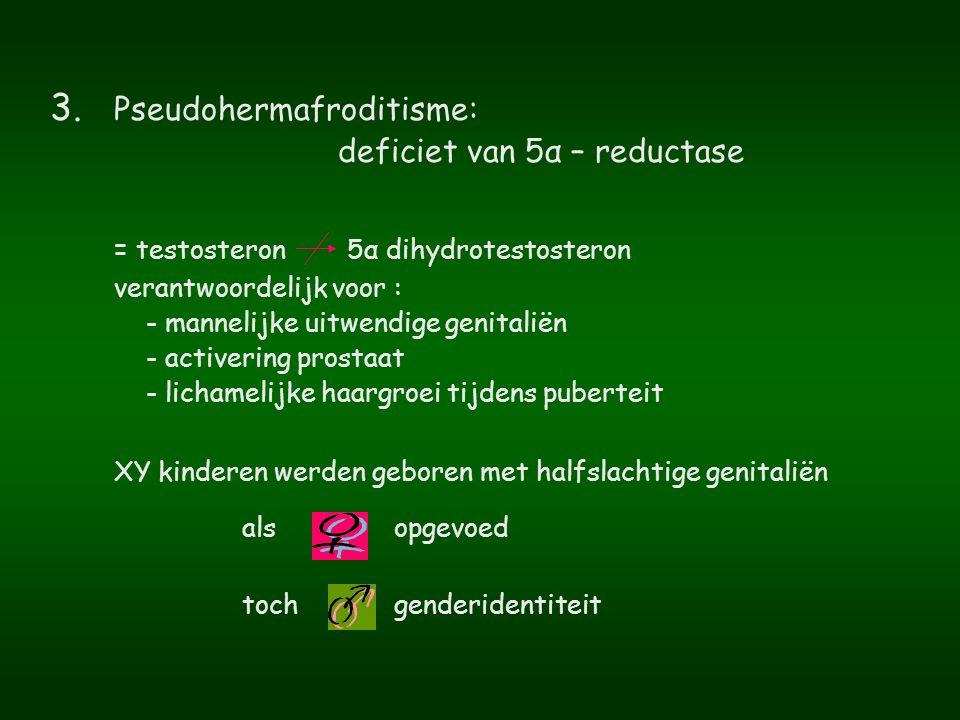 = testosteron 5α dihydrotestosteron