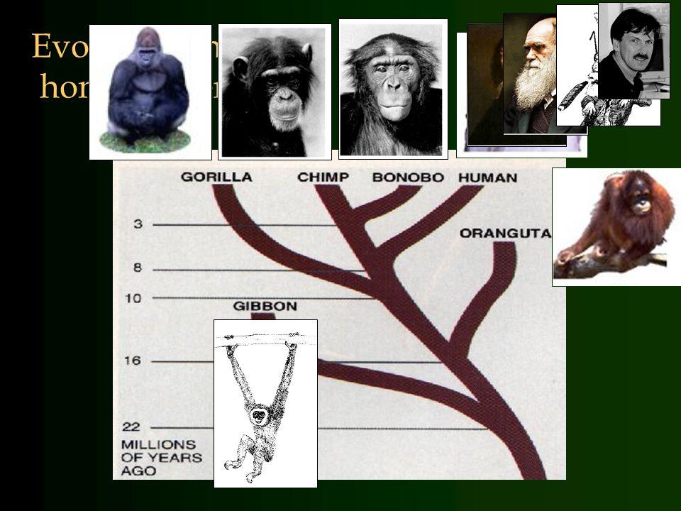 Evolutie van homo sapiens