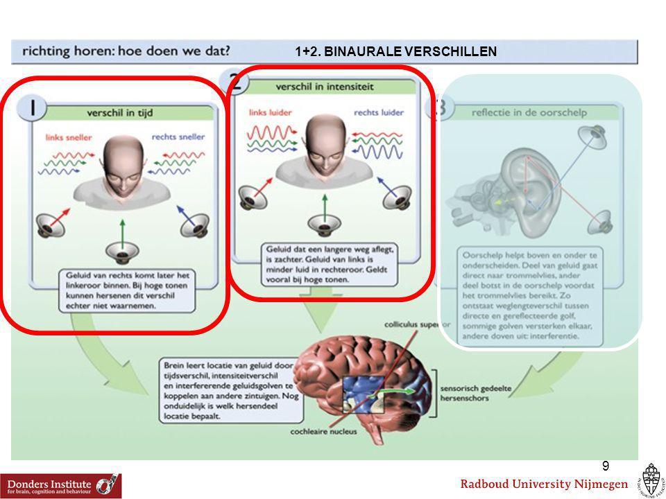 + - 1. Verwerking van intensiteitsverschillen in de hersenstam:
