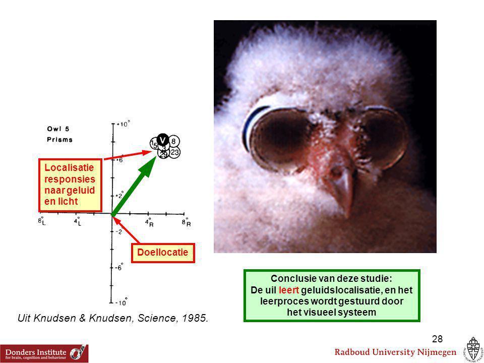 Uit Zwiers et al., Nat Neurosci 2003