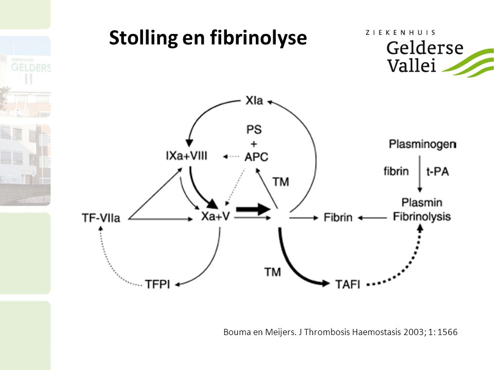 Stolling en fibrinolyse