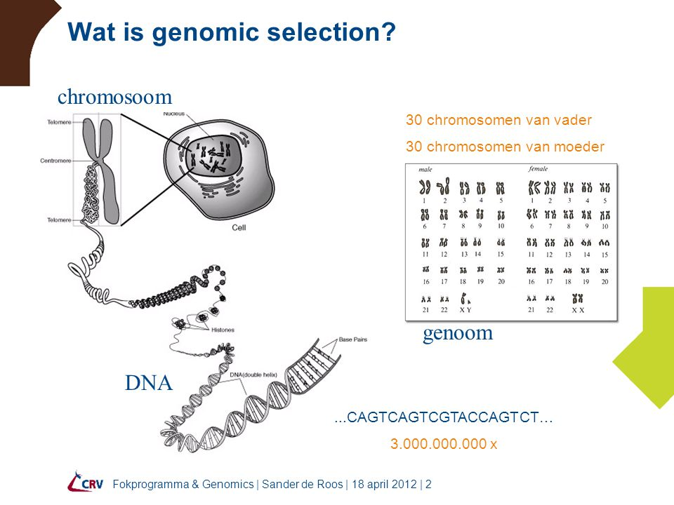 Wat is genomic selection