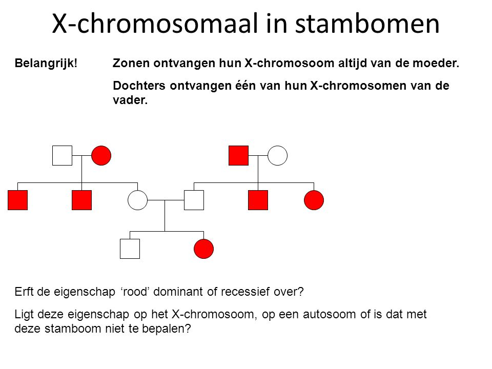 X-chromosomaal in stambomen