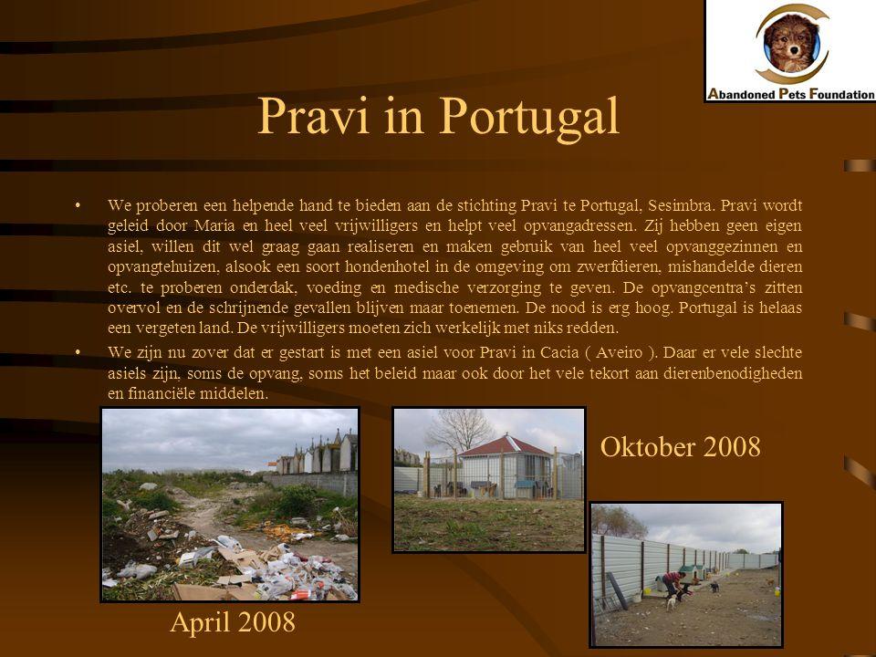 Pravi in Portugal Oktober 2008 April 2008